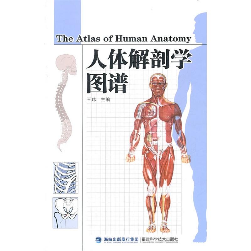 人体解剖学_人体解剖学图谱