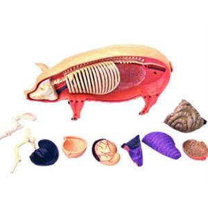 动物解剖挂图图片大全 犬科动物骨骼解剖结构
