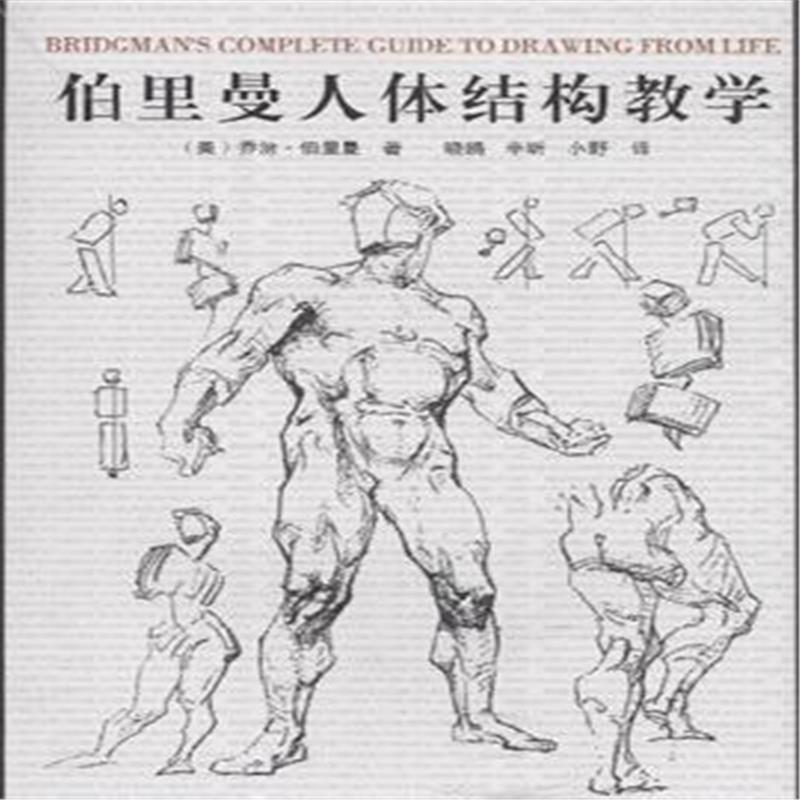 《伯里曼人体结构教学》(美)