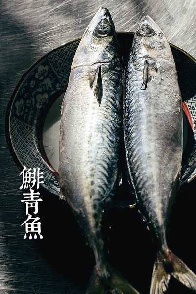 壁纸 动物 鱼 鱼类 400_600 竖版 竖屏 手机