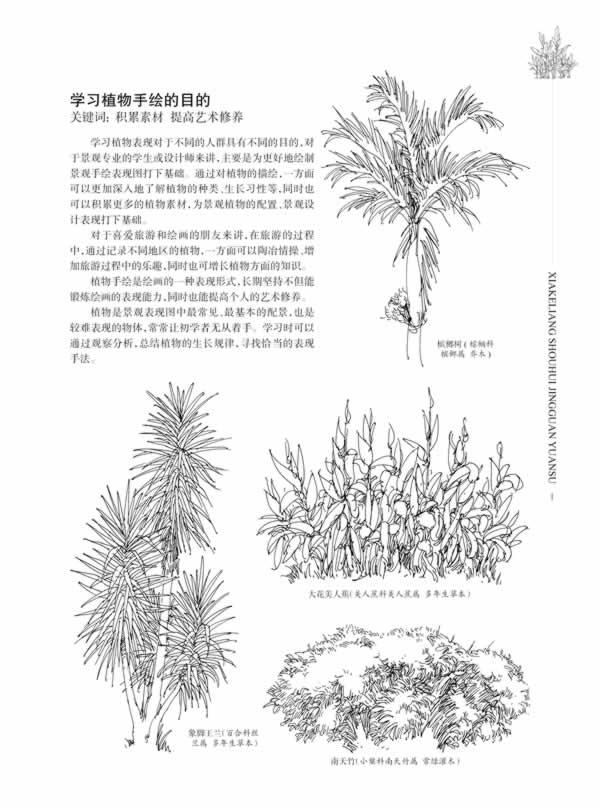 植物写生步骤五年级