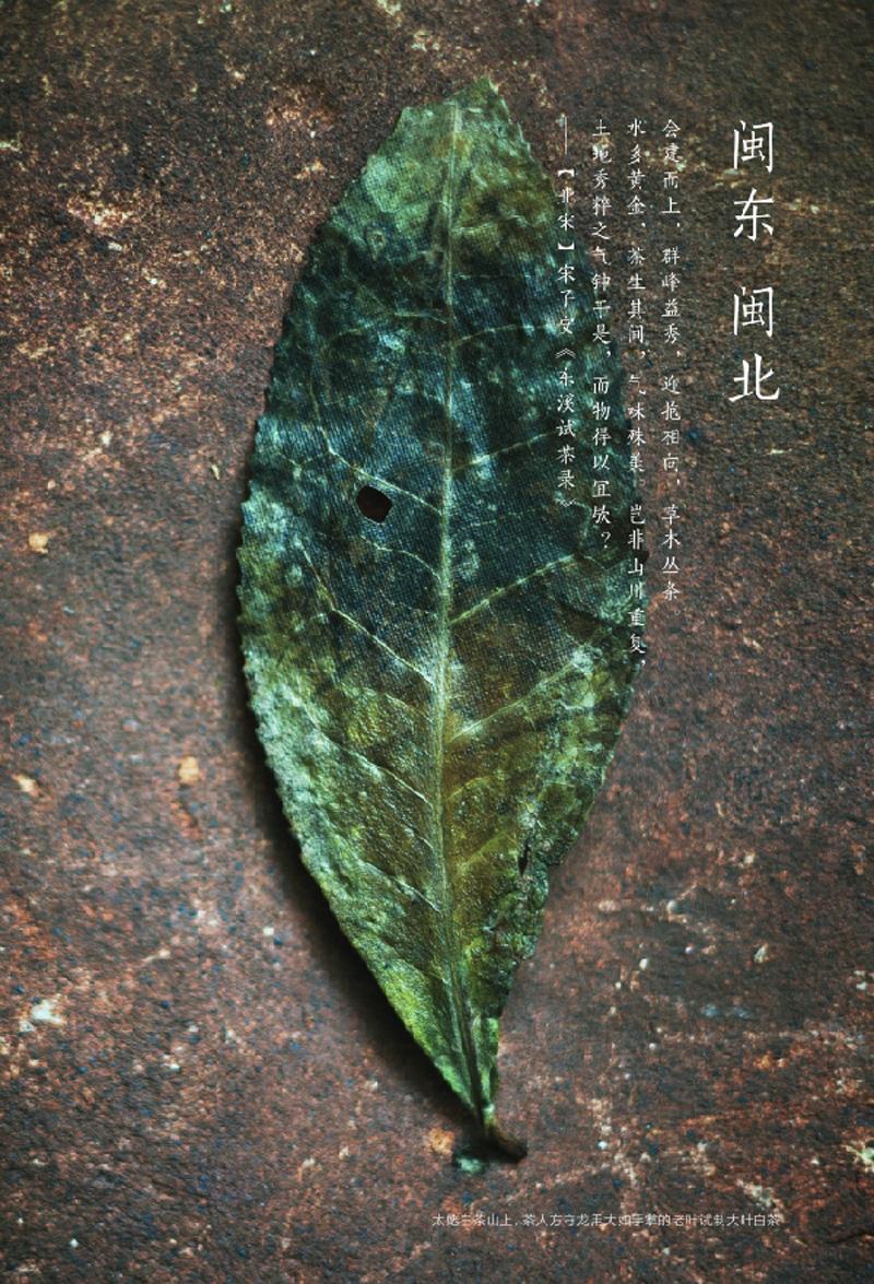 野生植物的茶树