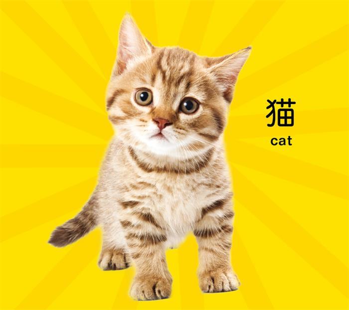 猫咪手绘图可爱