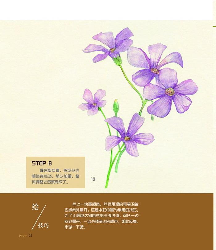 植物达人手绘笔记 涂涂猫著 9787111490876