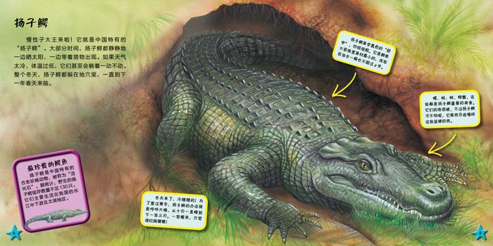 《我爱动物小百科 鳄鱼》((比)史蒂夫·帕克.)