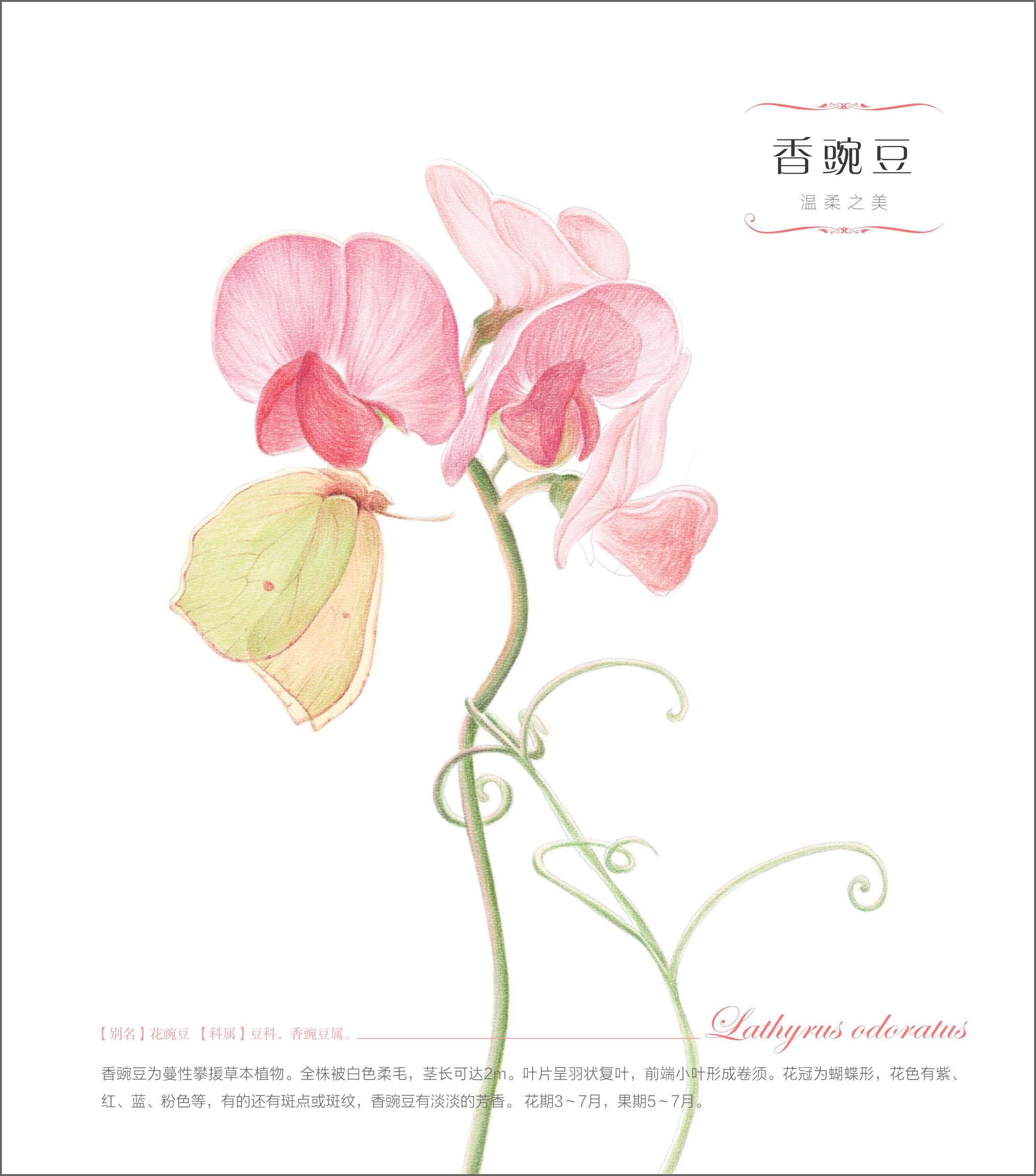 清新手绘封面花朵