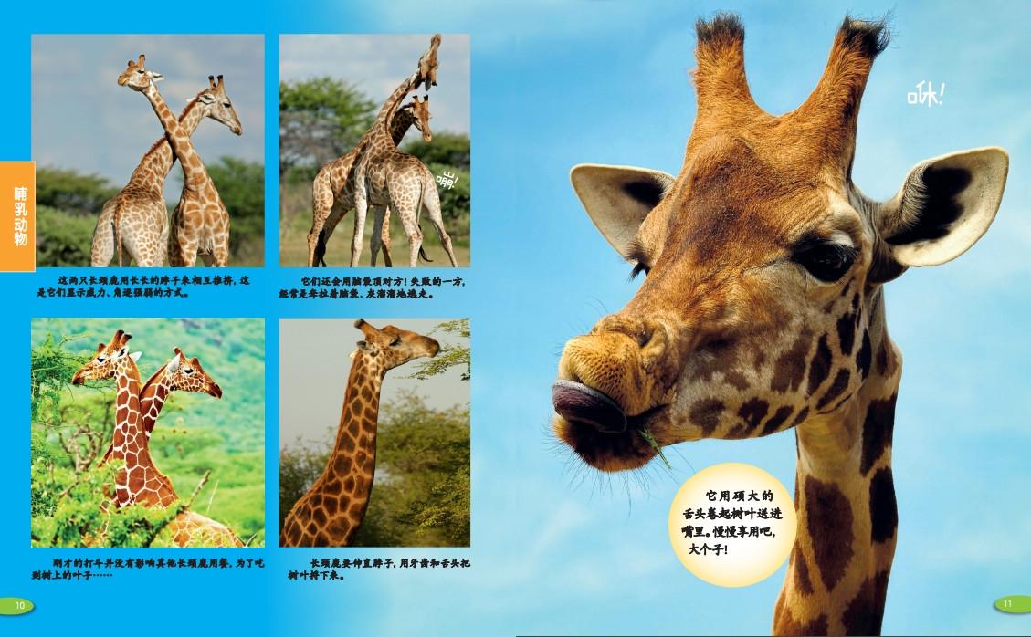 《神奇的动物世界(一套带你领略动物世界的神奇