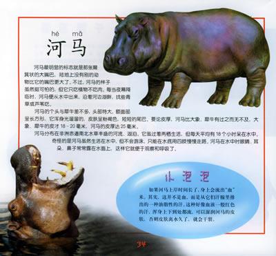 本书教小朋友们认识动物
