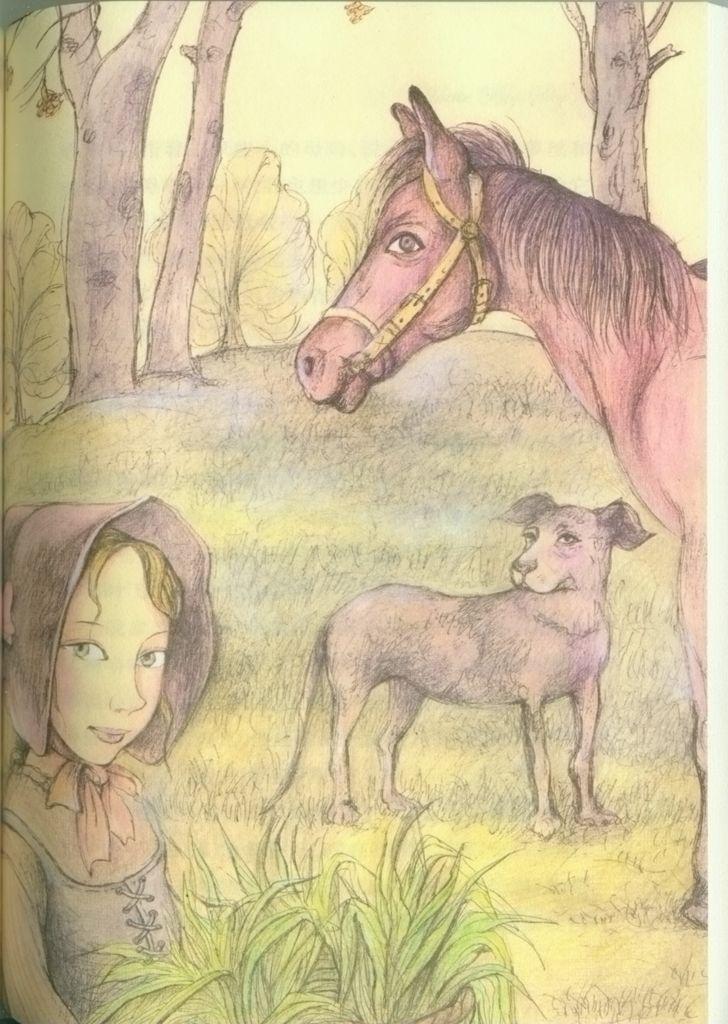 蒂的天空(纽伯瑞儿童文学