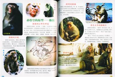 聪明的灵长类(哺乳动物篇)——自然图书馆