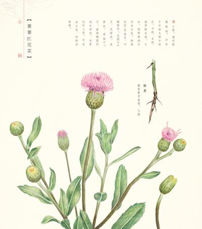 花之绘ii 二十四节气花卉的色铅笔图绘 花开花落,节气轮回,二十四番花