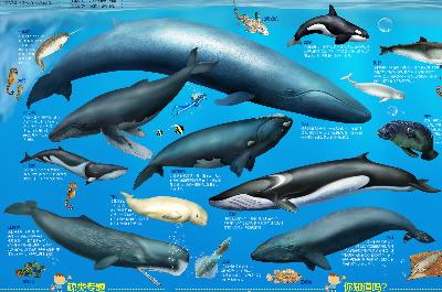 儿童房专用挂图 海洋动物/23163561