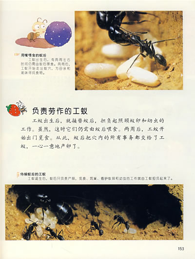 作为变温动物,蝴蝶更喜欢生活在高温地带