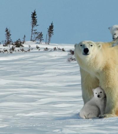 陆地力士--熊 动物世界大写真