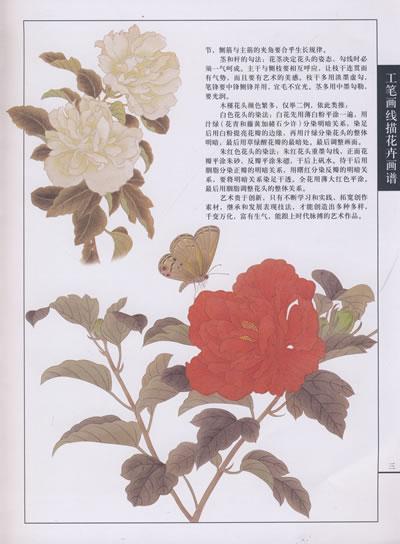 工笔画线描花卉画谱 木槿篇