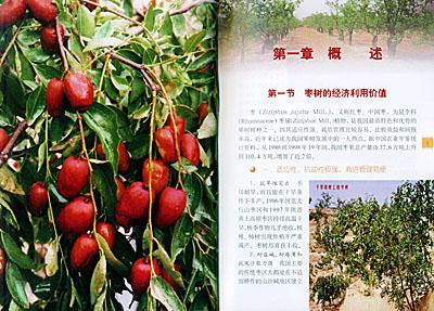 着重介绍枣树的优良品种,育苗,规范化建园,土肥水管理,整形修剪,保花